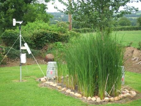 Reed bed being used as tertiary treatment for domestic on-site effluent