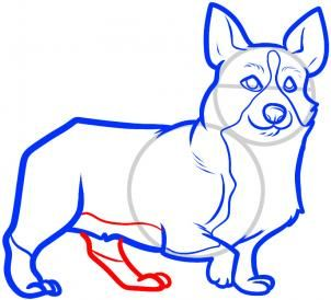 How to Draw a Corgi, Corgi, Step by Step, Pets, Animals, FREE Online Drawing Tutorial, Added by Dawn, September 21, 2011, 4:41:48 pm