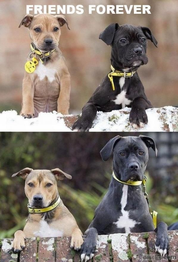 Growing Up TogetherPuppies, Heart, Dogs, Best Friends, Bestfriends, Growing Up, Friends Forever, 5 Years, Animal