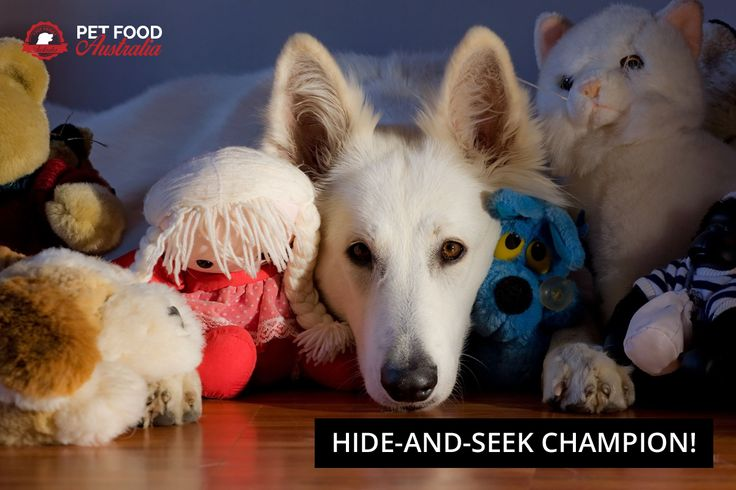 #dogs #dogsbelike