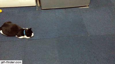 Vicious Kitten Attack