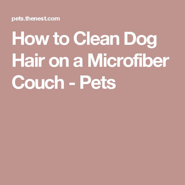 How to Clean Dog Hair on a Microfiber Couch - Pets