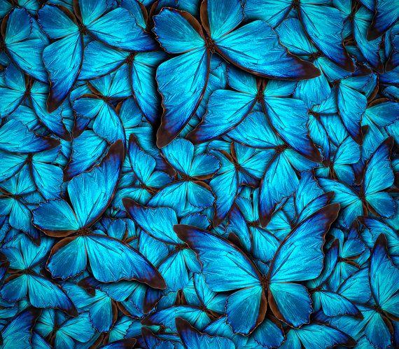 Blue butterflies wall art art print impresiones por Chachaprints