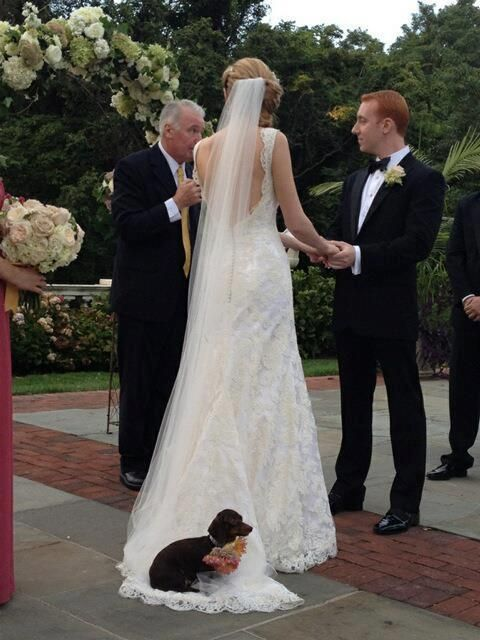 Invites a dachshund to her wedding...dog sits on dress. You know dachshunds don't like a cold floor!