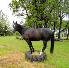 Tire Horse Trail Obstacle - PetDIYs.com