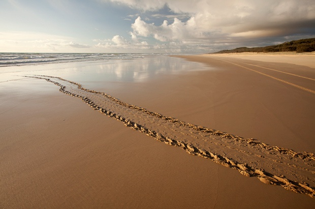 """Rush hour"" on Fraser Island, the World's Largest Sand Island - Queensland, Australia"