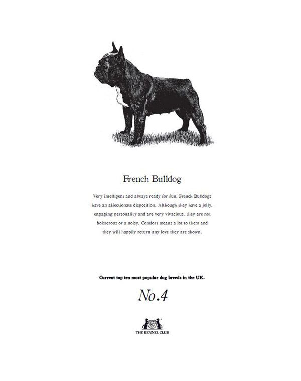 French Bulldog Tea Towel The Kennel Club Official Shop