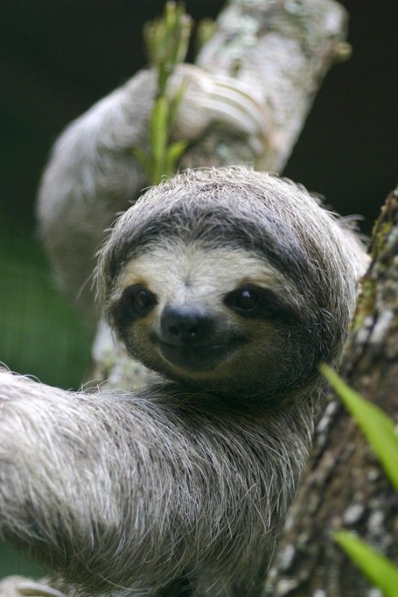 Another happy sloth ~ was just talking about sloths today with my niece ~ ALW