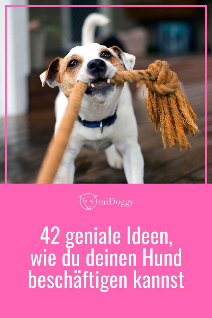 42 geniale Ideen, wie du deinen Hund beschäftigen kannst – miDoggy || Ideen rund um den Hund
