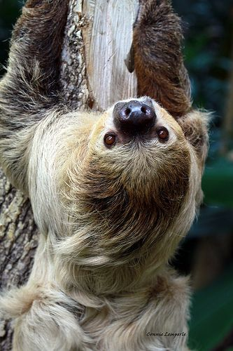 Watch: The look of pure joy on this sloth's face as she ...