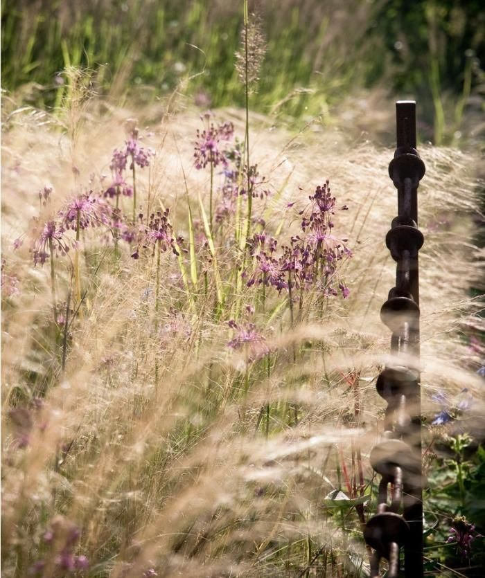 Brown brooms - perennial grasses ; Gardenista - Provided by Gardenista