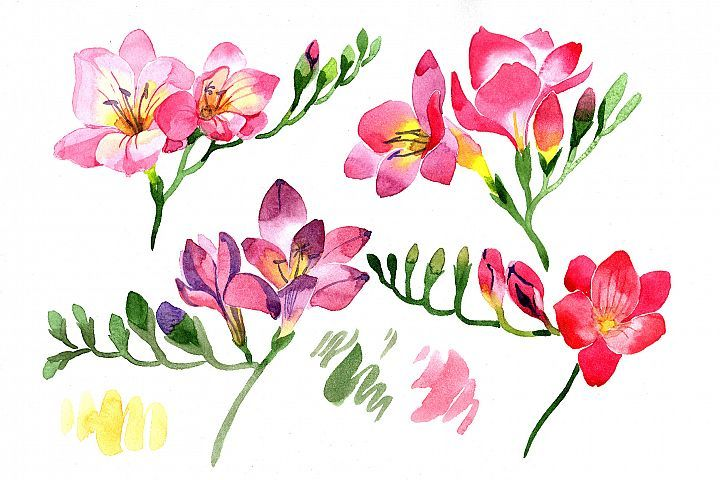 Pink Freesia Flower Watercolor Png 312586 Illustrations Design Bundles Freesia Flowers Watercolor Flowers Red Flower Wallpaper
