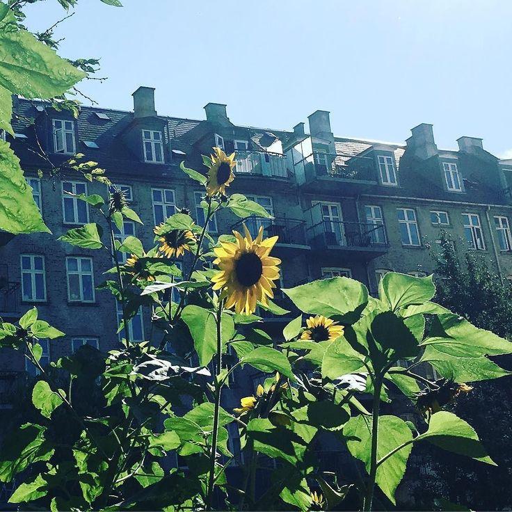 Copenhagen backyard #Vesterbro