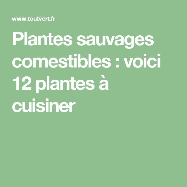 Plantes sauvages comestibles : voici 12 plantes à cuisiner