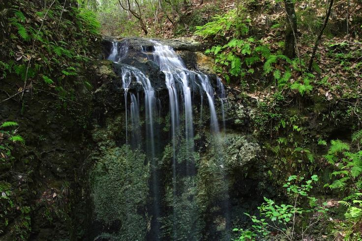 And the Falling Waters State Park in Chipley. | 31 Gorgeous Pictures That Prove Florida Is Paradise
