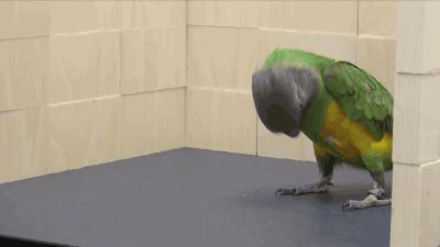 "Funny animal gifs - part 182 (10 gifs) | ""Tada!"""