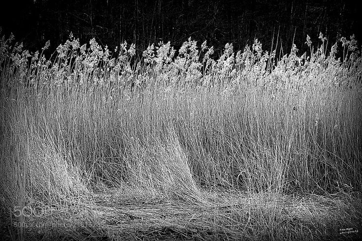High grass by the sea - From Hvaler very south of Norway