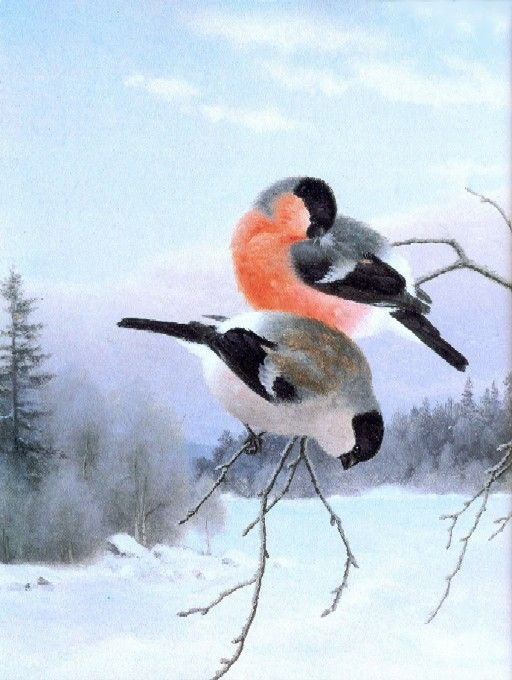 """Northern bullfinches on a branch"" - ""Punatulkkuja oksalla""  Ferdinand von Wright"