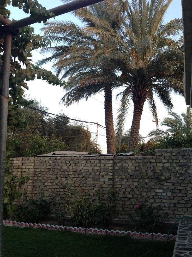 Wonderful, wonderful palmtrees