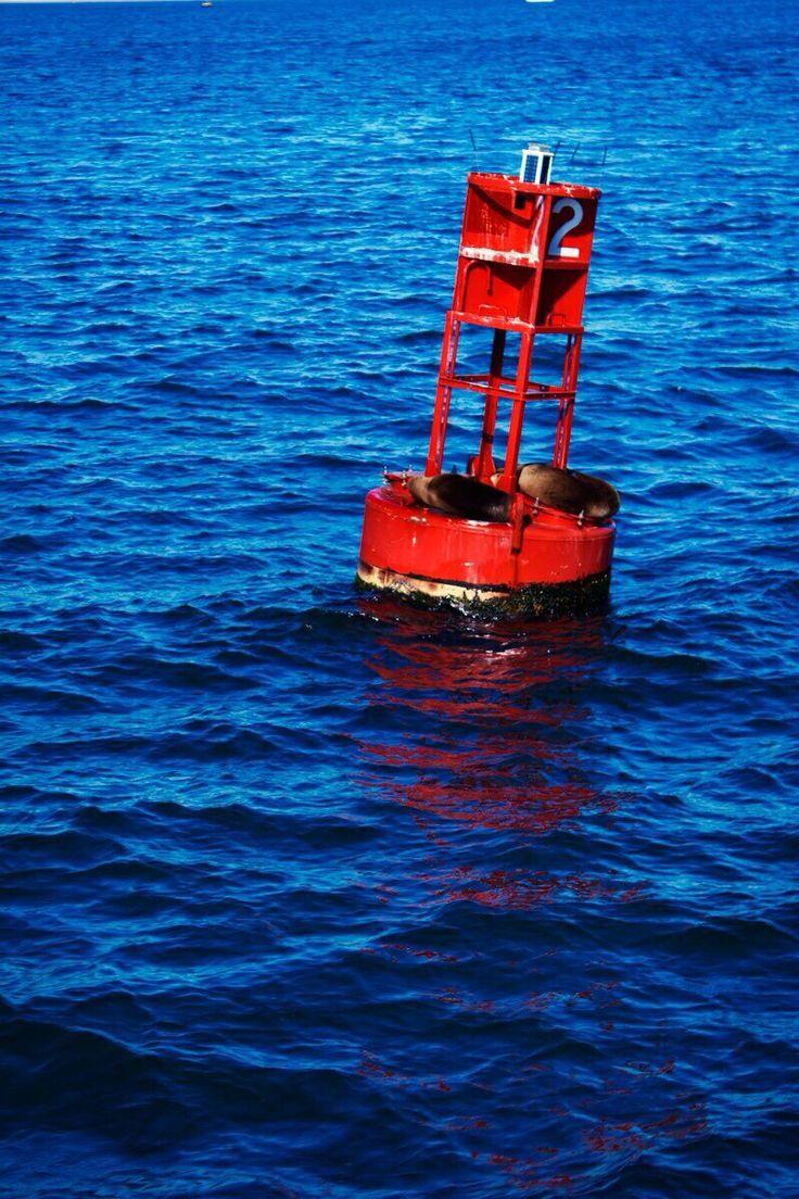 Long beach. Seals on a buoy.