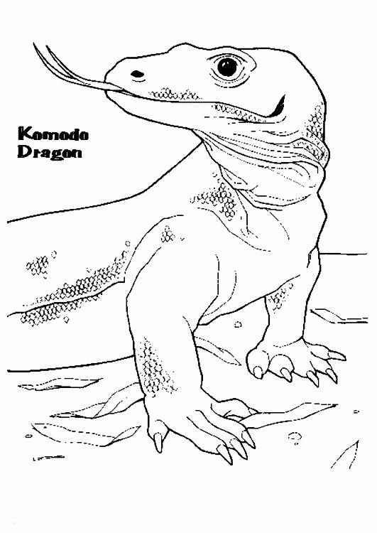 Komodo Dragon Coloring Page : komodo, dragon, coloring, Komodo, Dragon, Coloring