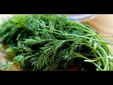 Health Benefits of Dill - World Of Herbal Health
