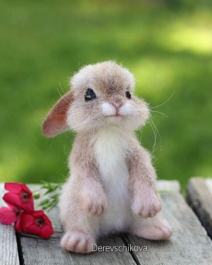 староказацкие появилось картинки с милыми очень кроликами случаем тебя девчонки