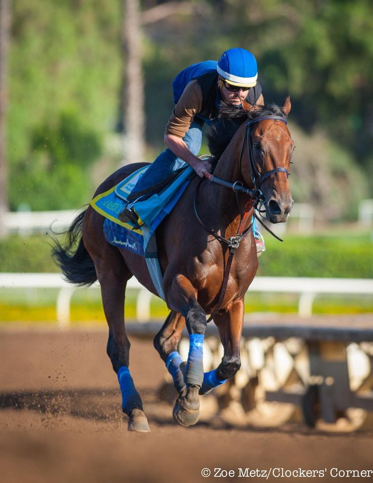 Triple Crown champ, American Pharoah out to stretch his legs this am @santaanitapark