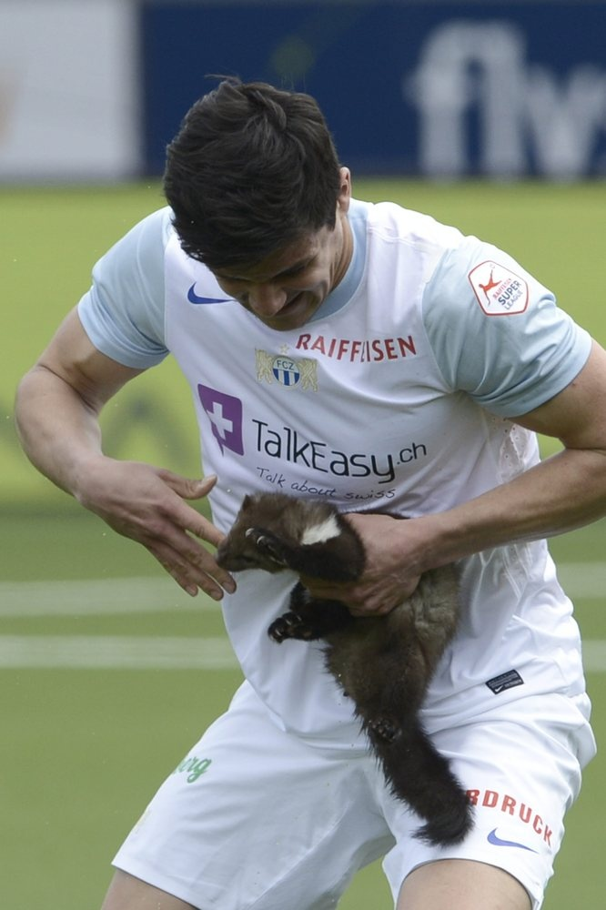 A marten bites in the finger of Zurich soccer player Loris Benito after he caught the animal during the Swiss Super League match between FC Thun and FC Zurich in the stadium in Thun, Switzerland, Sunday March 10, 2013.