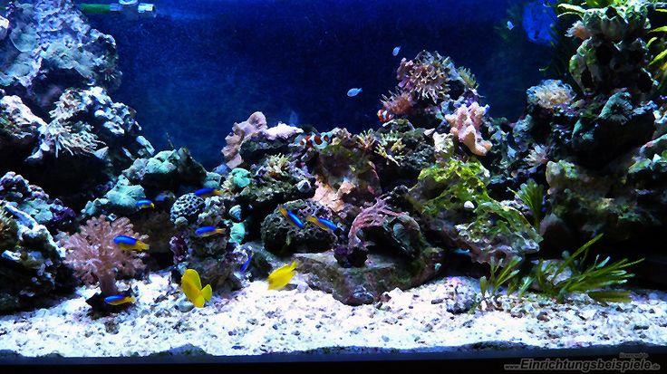 mein-seewasser-aquarium--09-06-2015__0d803001bc68f71daeacbf3eb6f426a3.jpg 945×531 Pixel