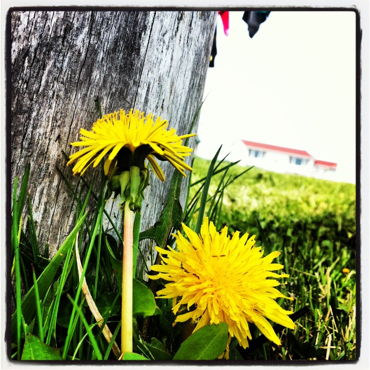 Bumblebee flowers at frenchmans cove be sure to check out bee originals photography by Ashley myles