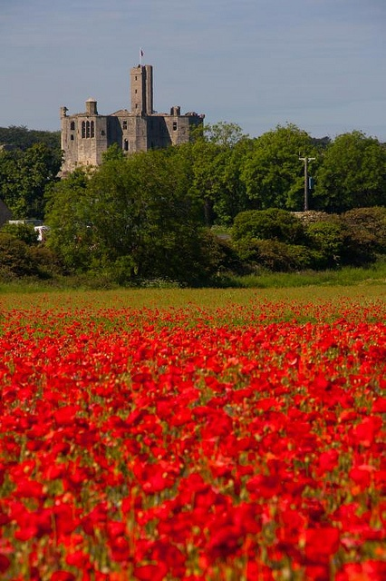 Poppy field at Warkworth Castle Northumberland. Our tips for 25 fun things to do in England: http://www.europealacarte.co.uk/blog/2011/08/18/what-to-do-england/