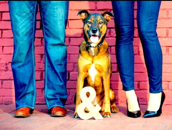 Engagement photo session with the dog! Love this.