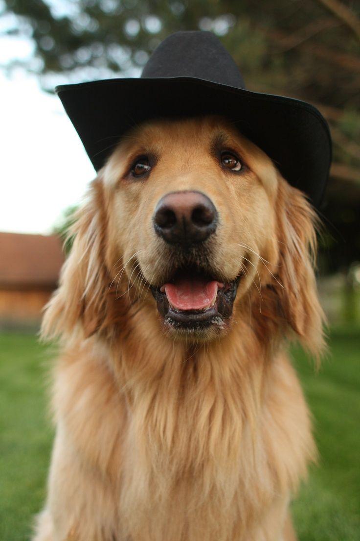 Pin By Kathie Podiak On I Love Golden Retrievers Dog Life Best