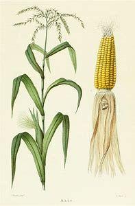 Image result for Printable Botanicals