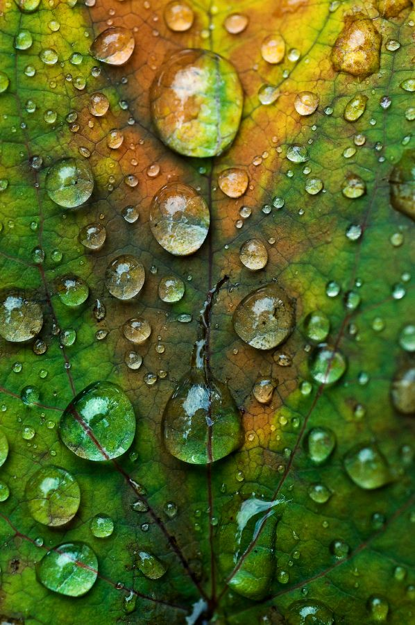 water drops on a leaf (from - http://thishopelessromantic.tumblr.com/post/19776155024)