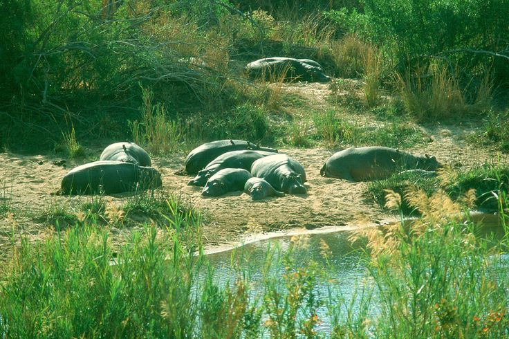 Kruger National Park Calendar - March   #travel #tourism #southafrica #kruger #safari
