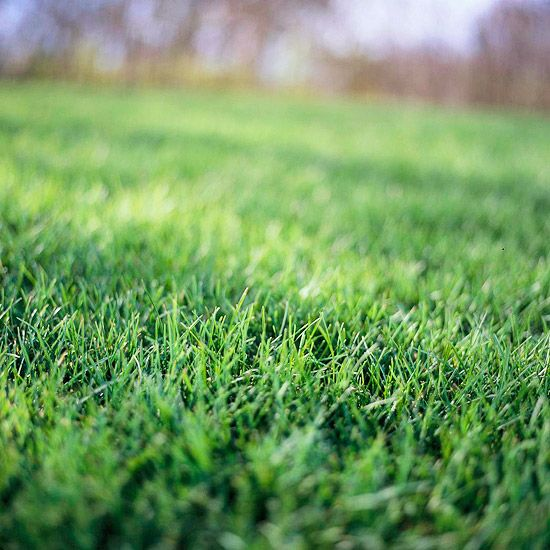 put pre-emergence herbicide on lawns in March to keep annual weeds such as crabgrass at bay
