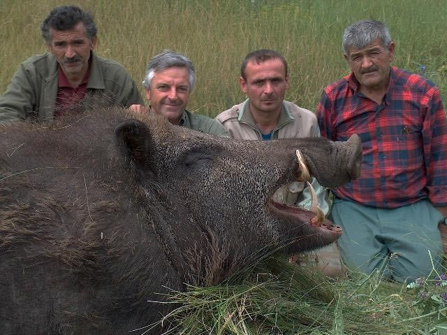 Was There Really an 1800-Pound Wild Boar and Did This Hunter Really Kill It?: Giant Wild Boar - Image #2