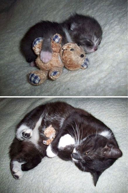 My cat has his own baby teddy bear too!