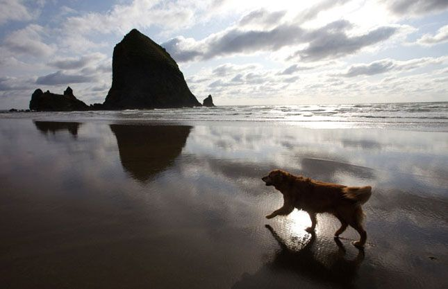 Looking for a dog-friendly travel spot? Check out Cannon Beach, Oregon.
