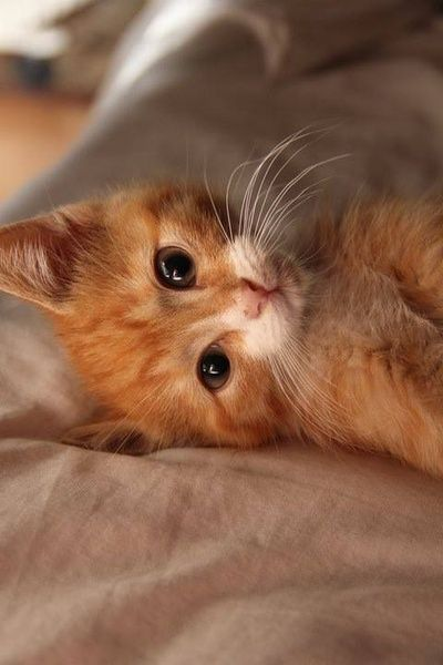 Just thinking about kitty things...