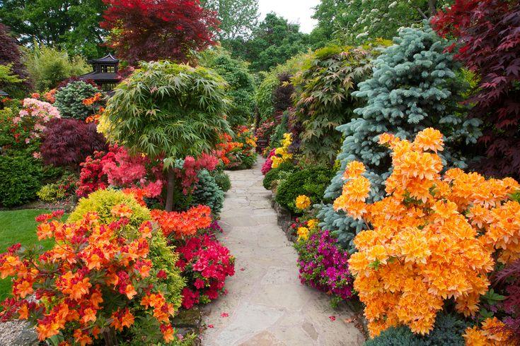 Azalea flowers line the pathway to the lower garden (June 5th) | by Four Seasons Garden