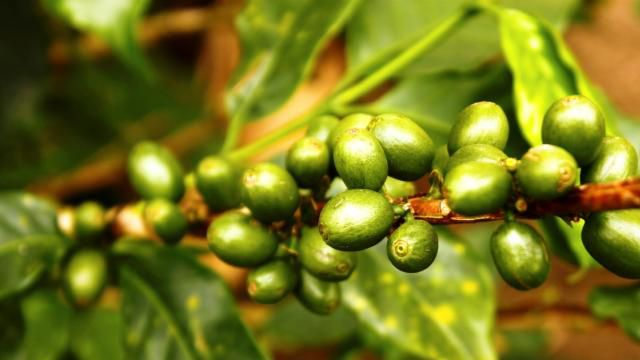 Il Caffe Verde e' utile a dimagrire? http://caffeverdeitalia.wordpress.com/ #caffe #caffeverde
