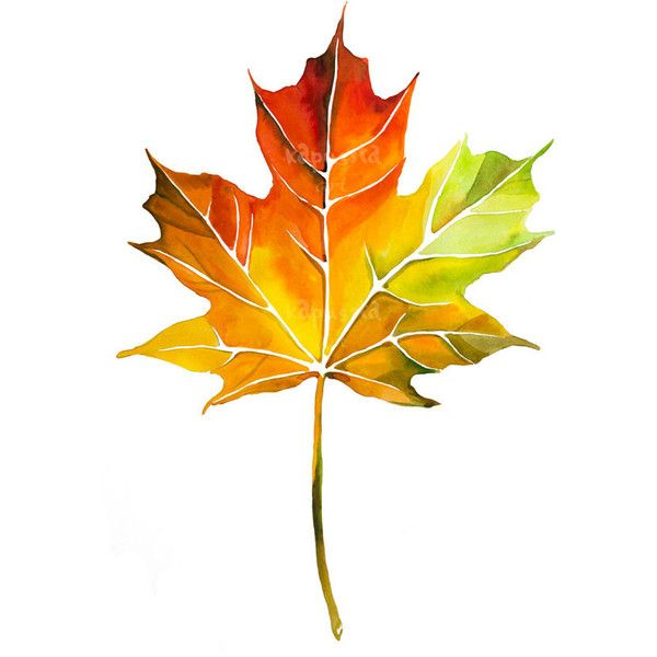 Maple leaf Digital Download Art printable, red and yellow watercolor... ($2.50) ❤ liked on Polyvore featuring home, home decor, wall art, fall, autumn, leaves, watercolor, red wall art, yellow home decor and autumn paintings