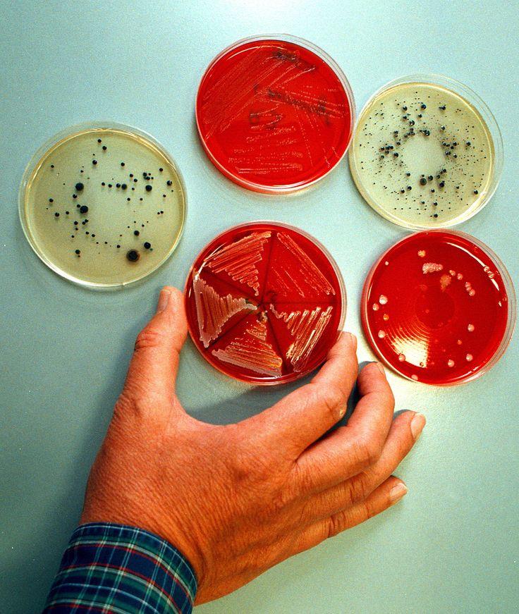 Forskning i stamceller kan få stor betydning for helbredelse af sygdomme.