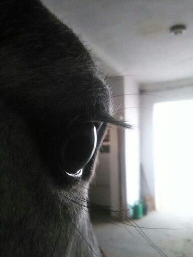 """,,A Ló szemei közt nyugszik az egész világ"""""""