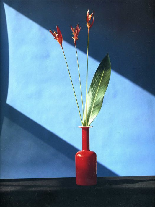 """Flowers, still life"" 1980s, photo by American photographer ROBERT MAPPLETHORPE (1946/1989)"
