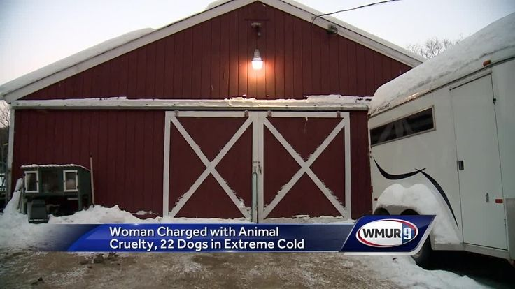 Alexandria police said it was -11 degrees in the barn on Tuesday and that the dogs' water bowls had been frozen for hours.