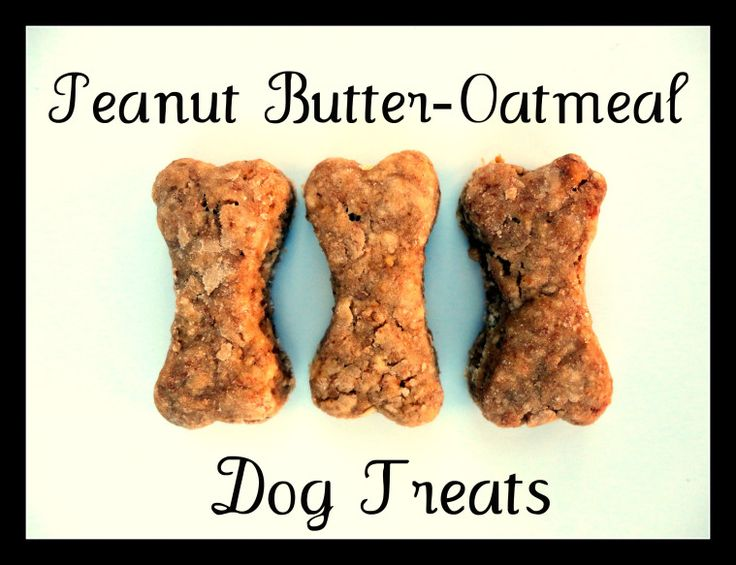 oatmeal peanut butter dog treats. Homemade Christmas treats in the stockings for ALL my adorable family paws.